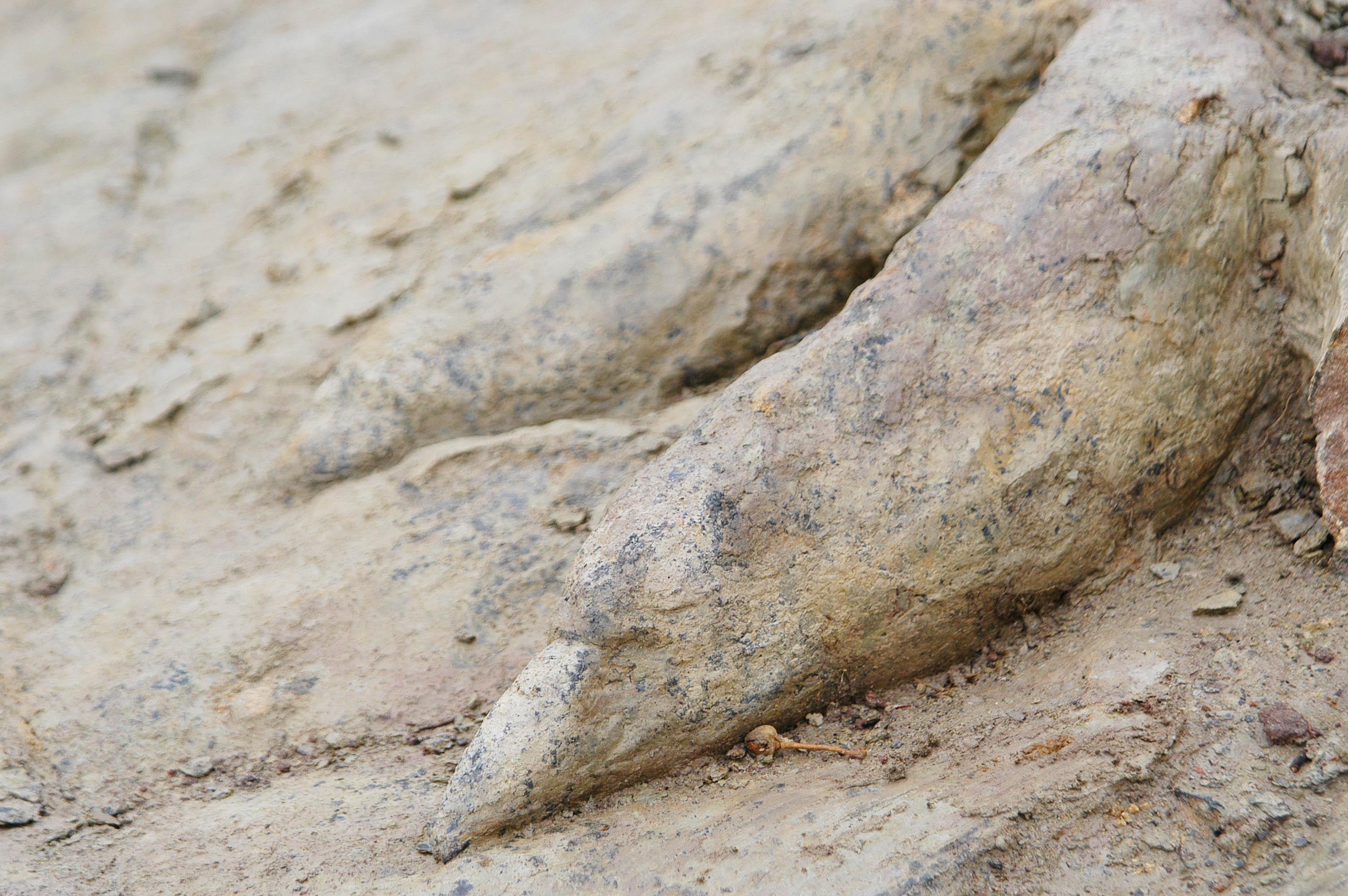 Un geólogo de la Universidad de Salamanca lidera un estudio sobre el mejor registro de huellas tridimensionales de dinosaurio de la Península Ibérica