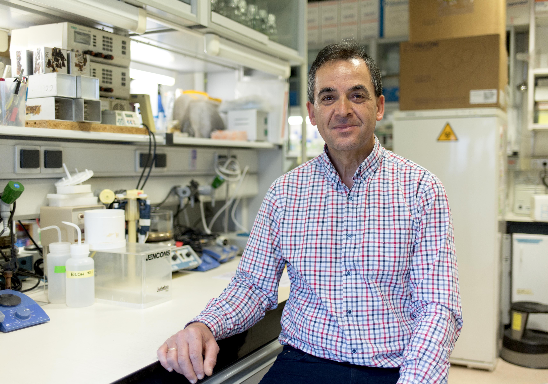 Descrita la implicación de HGAL en el desarrollo de linfomas difusos de células B grandes