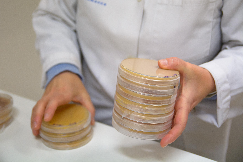La microbióloga de la USAL Martha Trujillo, primera mujer editor jefe de la más reputada revista internacional de sistemática de microorganismos