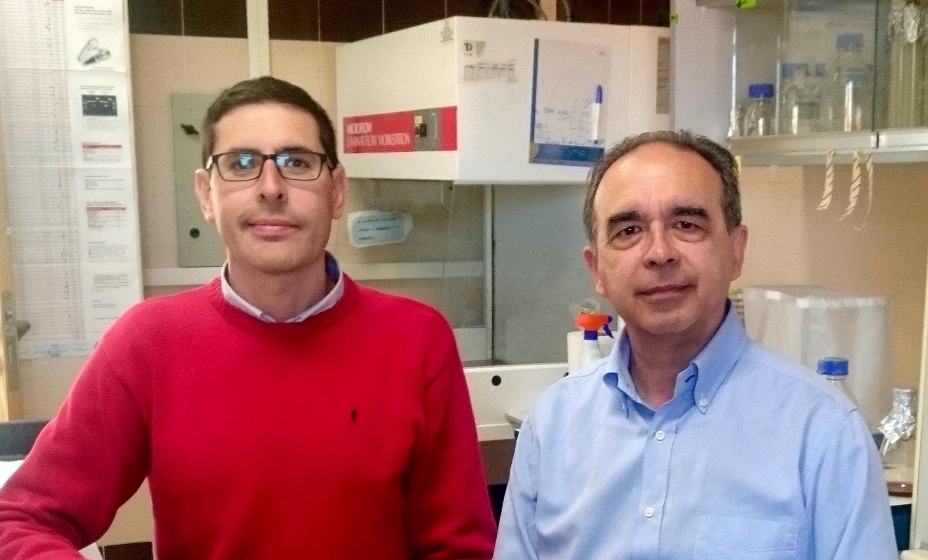 Científicos de la Universidad de Salamanca describen un mecanismo nuevo de regulación de una enzima clave para la correcta división celular