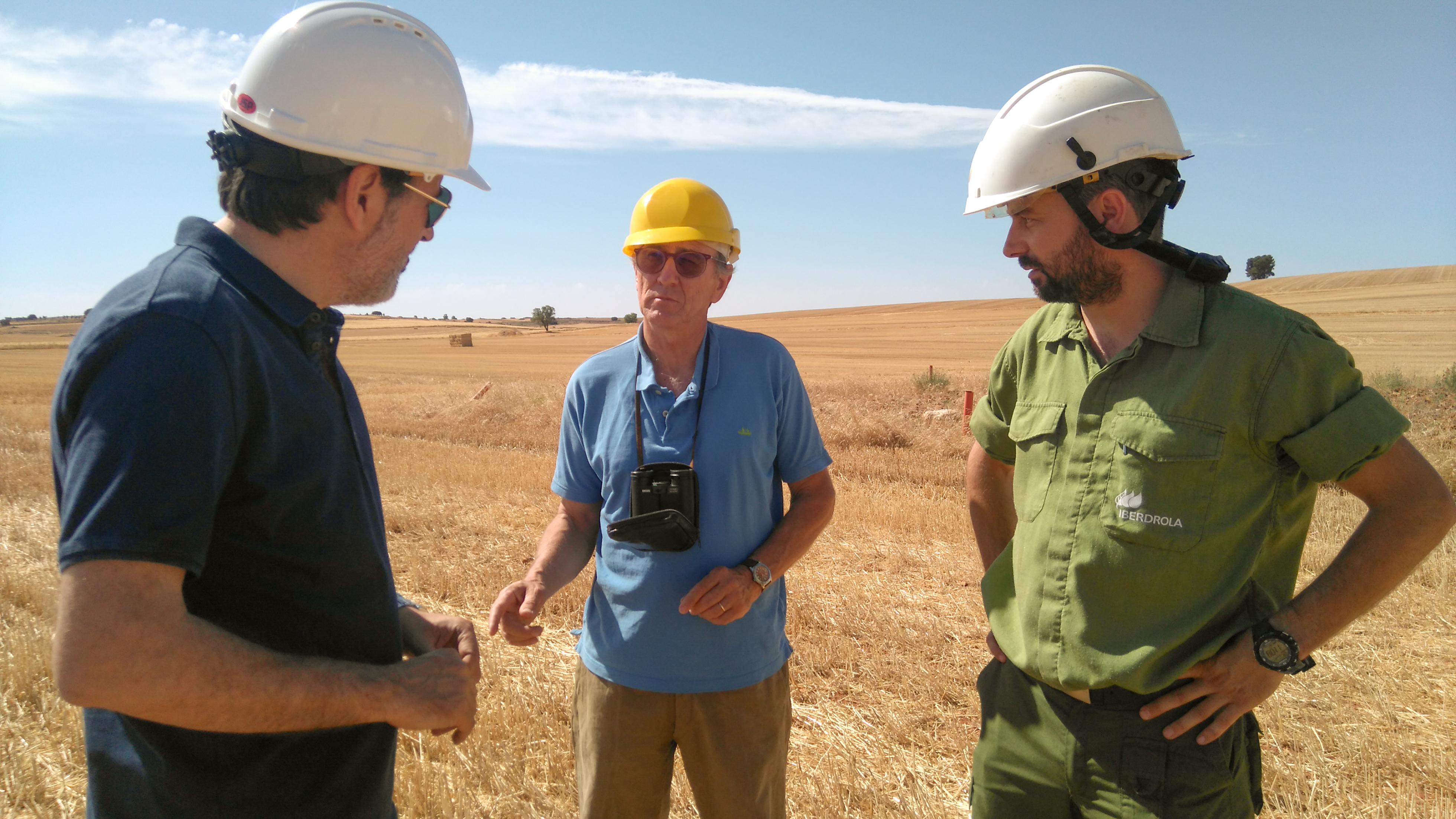 La Universidad de Salamanca e Iberdrola colaboran en la conservación del cernícalo primilla en Castilla-La Mancha