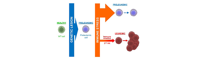 leucemia_final1.jpg
