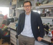 La Universidad, pionera en el estudio de la calidad del paisaje agrícola Mediterráneo a través de grupos de insectos polinizadores y depredadores