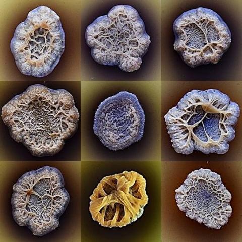 Cráteres bacterianos - Rocío Roca Couso